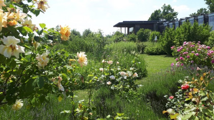 Kräutergarten beim Nationalparkzentrum Thayatal