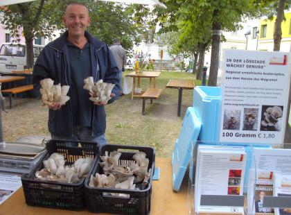 Erntefrische Austernpilze