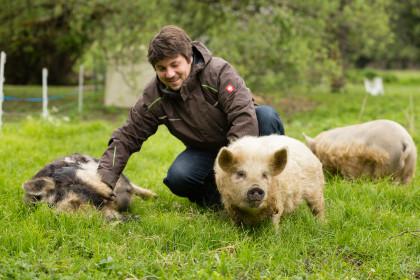 Kune Kune Schweine streicheln