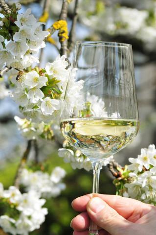 Weintour Weinviertel