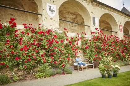 Garten und Rosentage