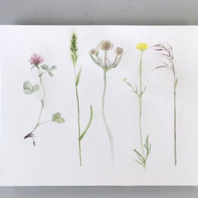 Botanische Illustration