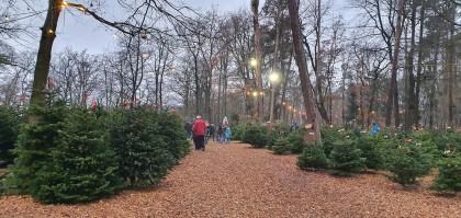 die schönsten Bäume vom Nahversorger - St.Pölten