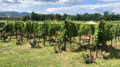 Weingenuss im Weingarten.