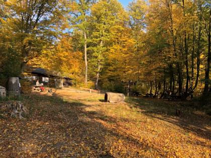 Naturpark im Herbst