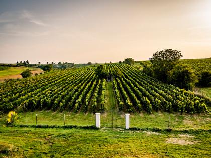 Blick in den Weingarten