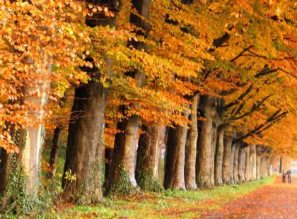 Kreativ-Nachmittag Herbst
