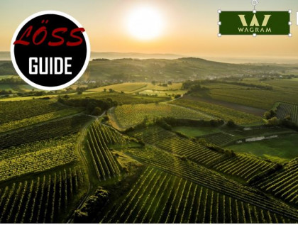 1. Wagramer Weincup