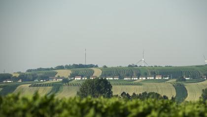 Kellergasse Alte Geringen in Ketzelsdorf bei Poysdorf