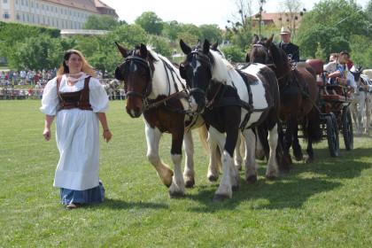 Tierumzug auf Schloss Hof