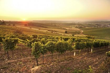 Weinort Herrnbaumgarten