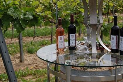 Mitten im Weingarten