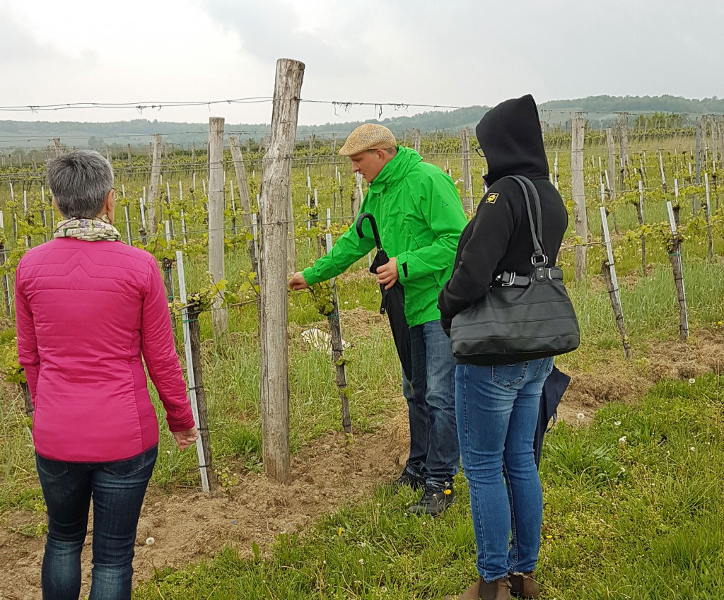 Weingartenführung mit Manfred Edelmann