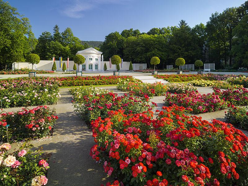Festival der Rosen