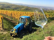 Bei der Arbeit im Weingarten