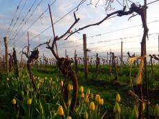 Seymanns Weinhandwerkerei