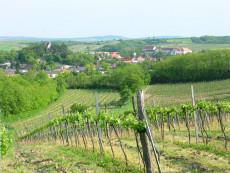 Weingut Fürnkranz - Mailberg