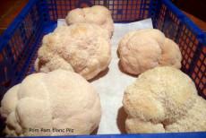 Pom Pom blanc Pilz