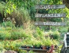 Susi's Pflanzentausch