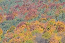 Herbst Naturpark