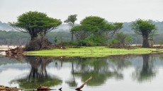 Amazonien, Rio Apuaú