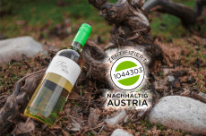 Weinschaun beim Winzer im Weingut Frei