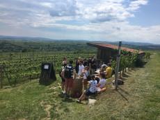 Weingartenschank am WEINWEG Langenlois