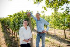 Weinbau Bauer - Röschitz