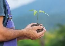Tage der Pflanze & Kräuter