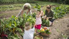 Gemeinsame Gemüseernte