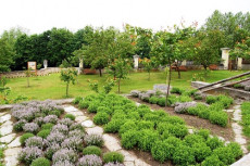 Kräuterbeete im Marillengarten