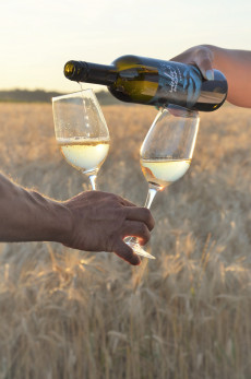 Weinbau Wiedermann