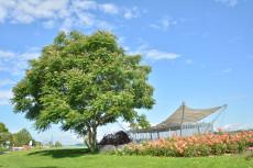Baumkunstwerk Götterbaum, Donaulände Tulln