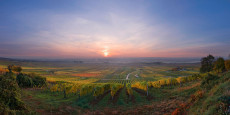 Wanderung durch den Weingarten