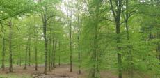 Waldbaden im Dunkelsteinerwald