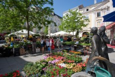 Markt am Herrenplatz