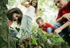 Sommerprogramm für Familien mit Kindern in Göstling-Hochkar