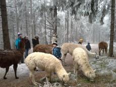 Lama und Alpaka Naturpark Hohe Wand