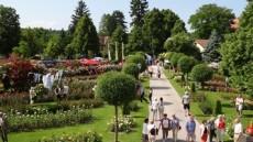 Rosengarten Pitten